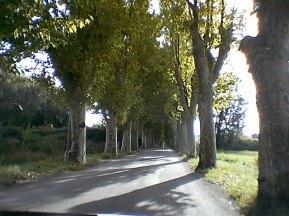 tr-prov18-Pretty-Road-in-Provence