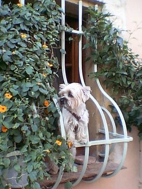 tr-prov22-Little-Dog-in-the-Window