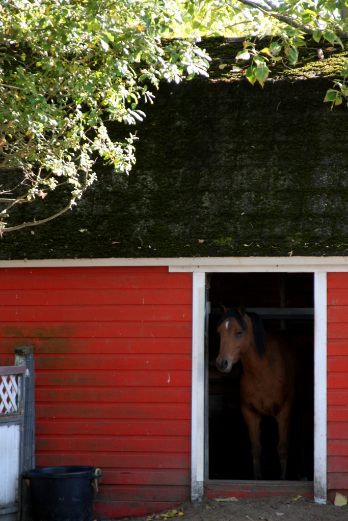 Pony in a little red barn