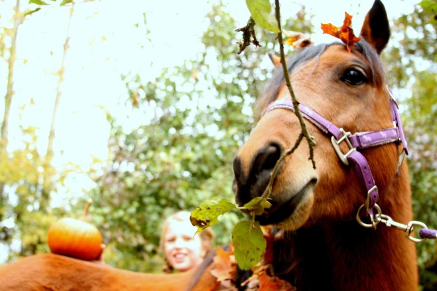 Pumpkin Bums